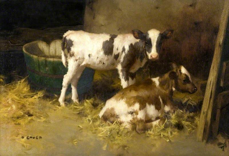 Two Calves