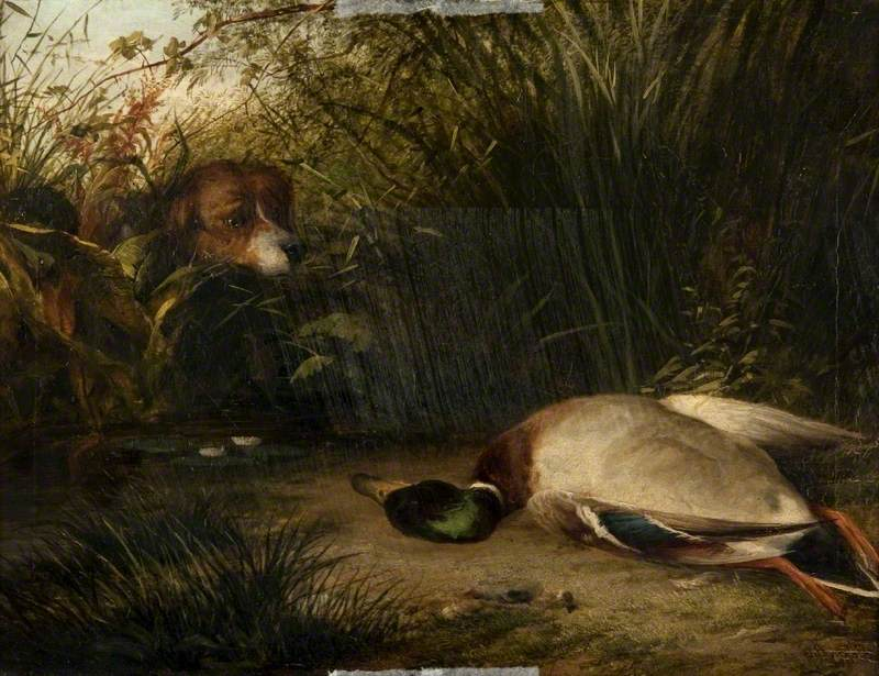 A Pointer and a Dead Wild Duck