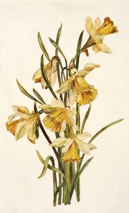 Still Life, Daffodils
