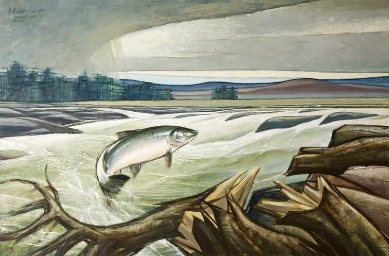Fresh Run, Atlantic Salmon, Stackpil River, Norway