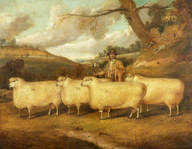 Mr Garne's Cotswold Sheep, Northleach
