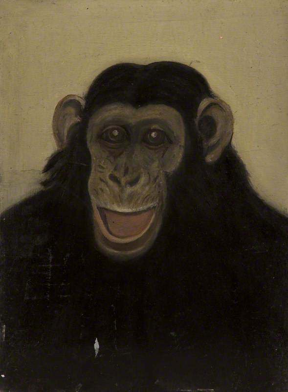 Head of an Ape