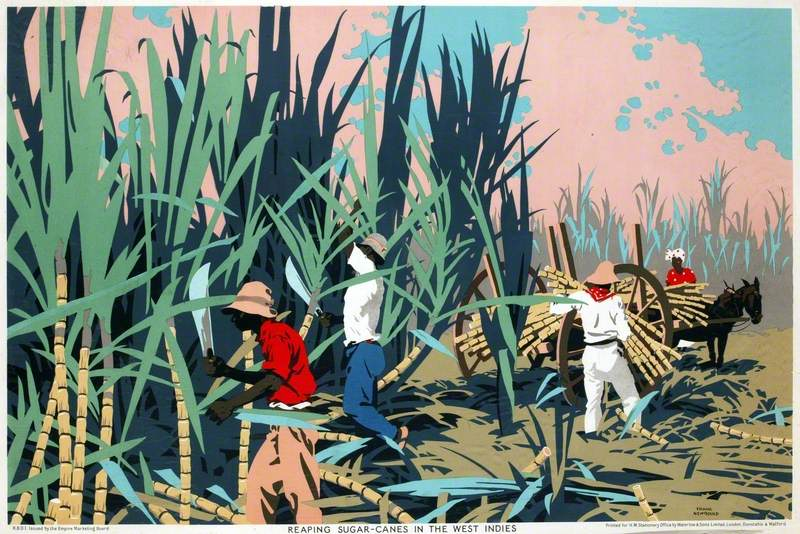 Reaping Sugar Canes in the West Indies