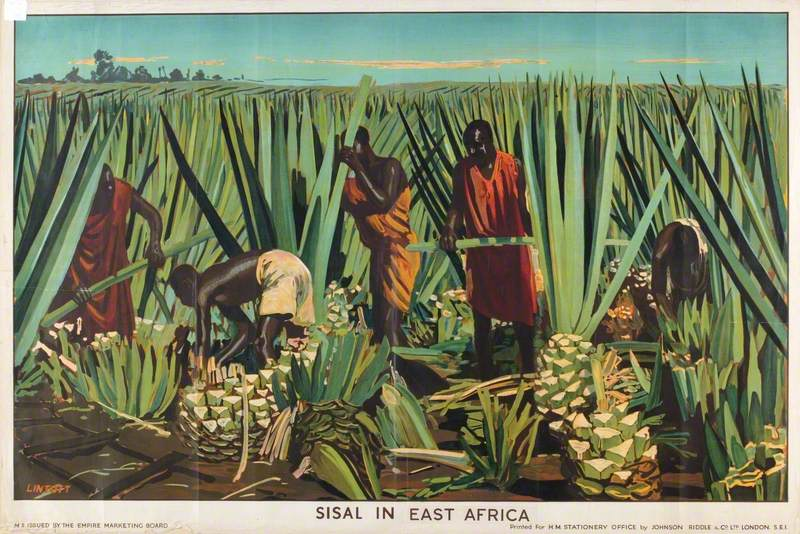 Sisal in East Africa