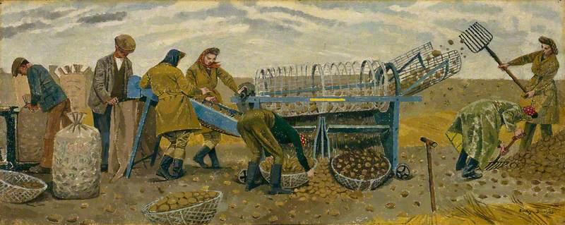 Potato Sorting, Berwick