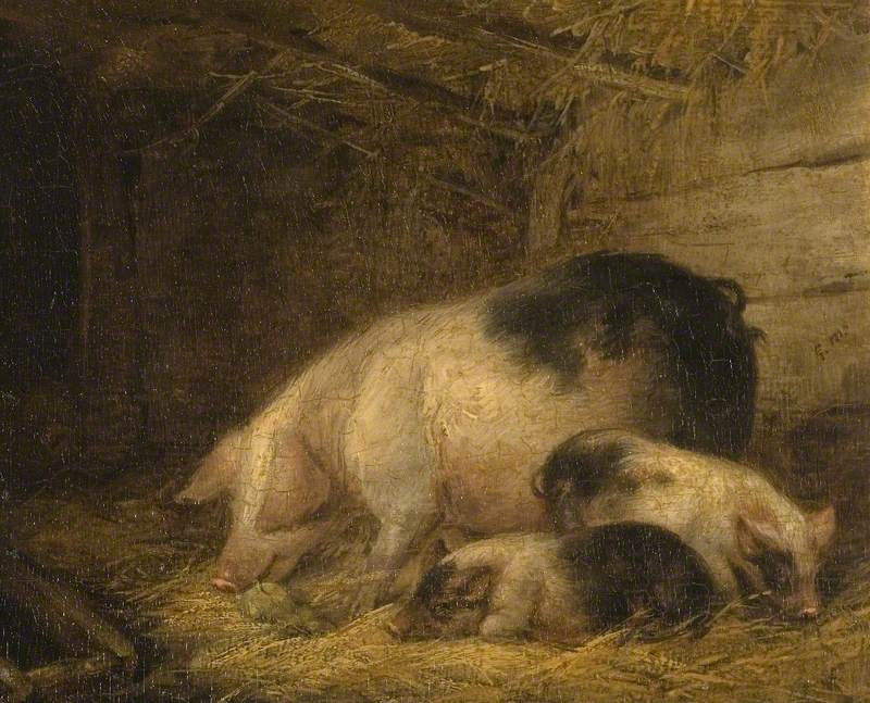 Sow and Piglets in a Sty