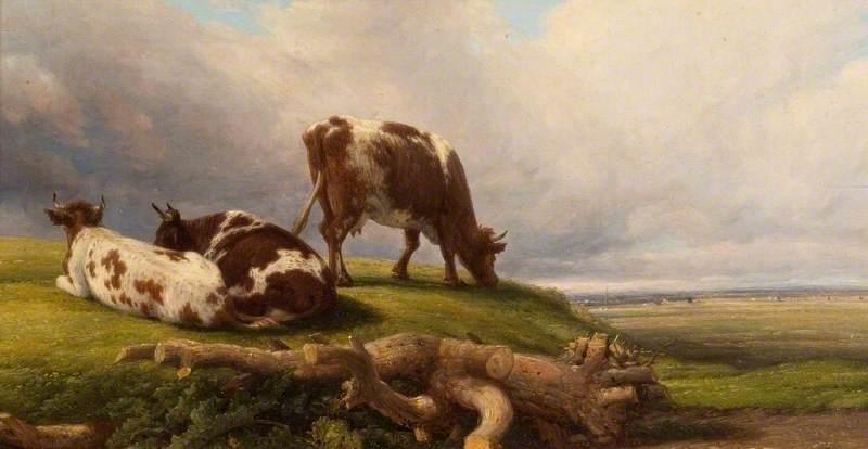 Extensive Landscape with Cows