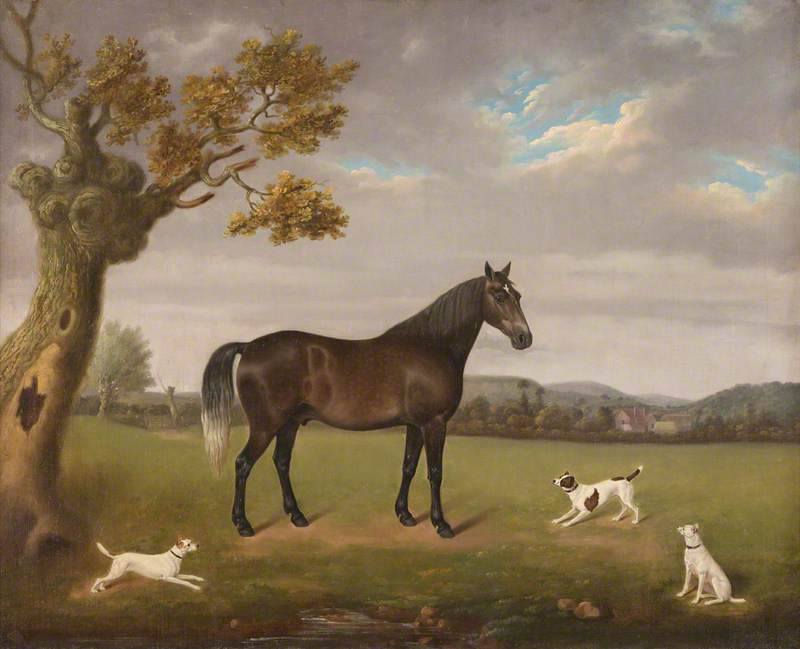 Horse in a Field with Three Dogs