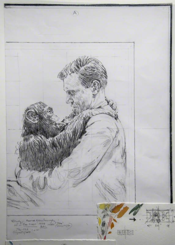 Study – David Attenborough with 'Jane' (Chimpanzee), First 'Zoo Quest' (1954)