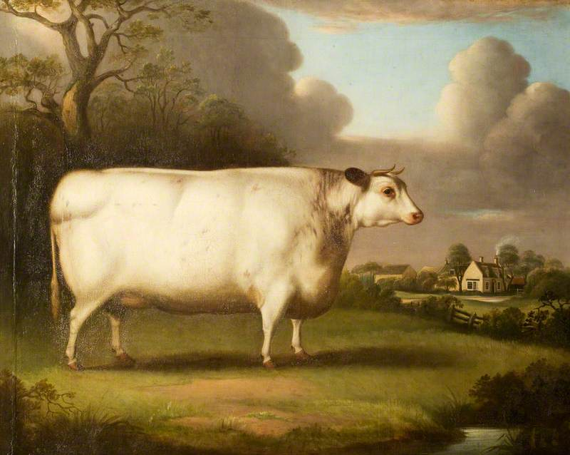 The Habertoft Heifer
