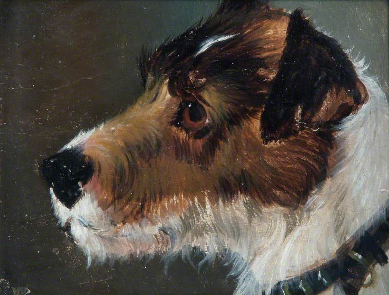 Head of a Rough-Haired Terrier