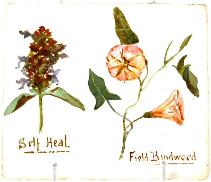 Self-Heal and Field Bindweed