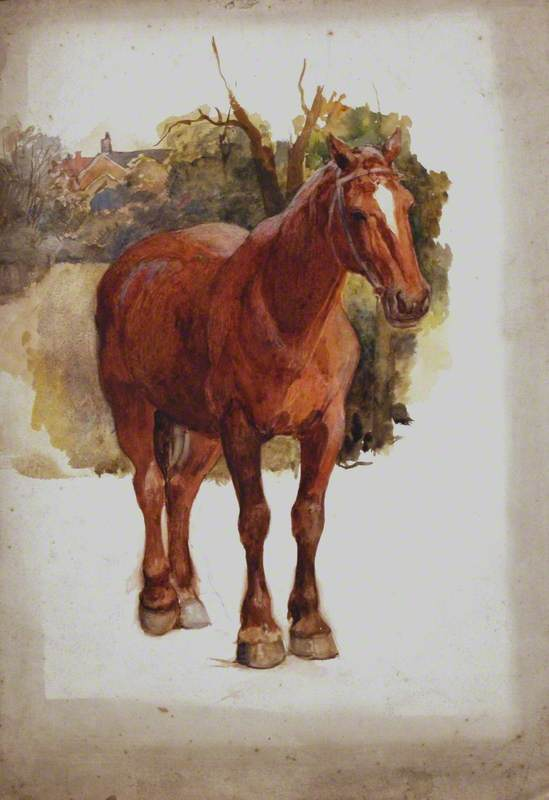 Study of a Brown Horse