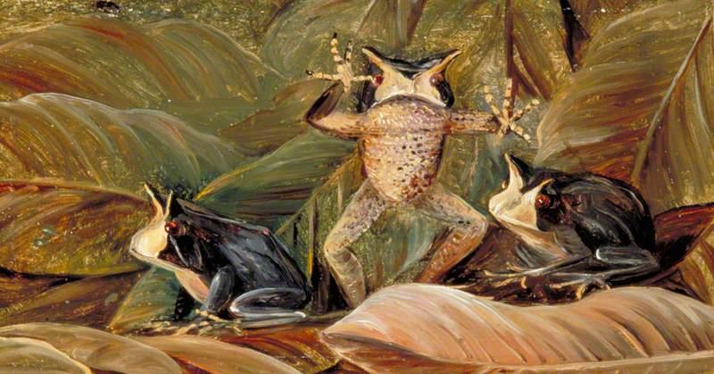 Tree Frogs, Found amongst Dead Leaves, Brazil
