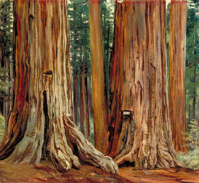 'Castor and Pollux' in the Calaveras Grove of Big Trees, California