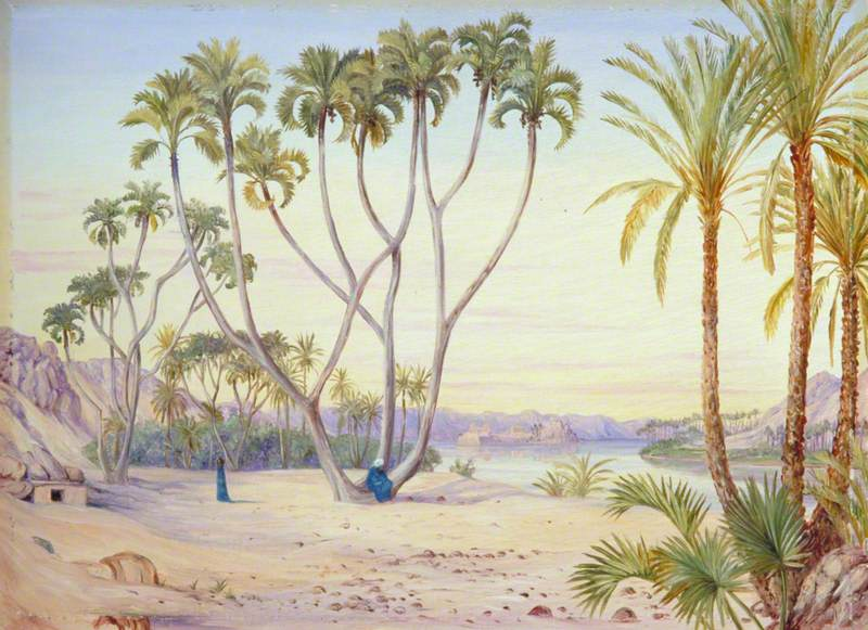 Doum and Date Palms on the Nile above Philae, Egypt