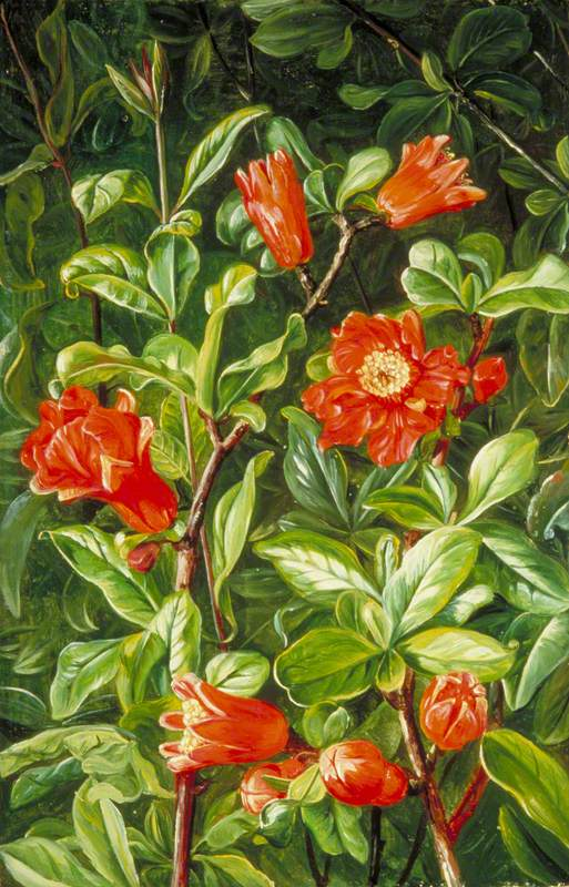 Flowers of the Pomegranate, Painted in Teneriffe