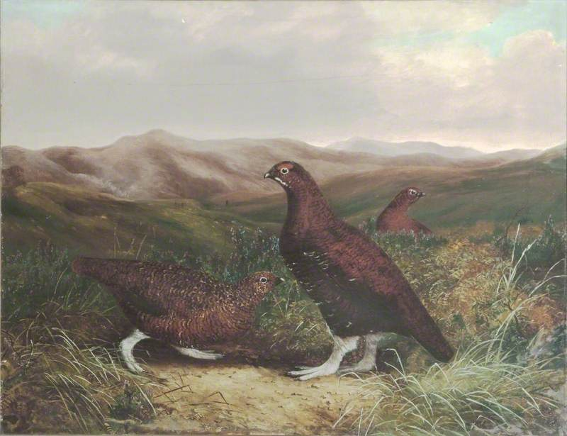 Cumberland Moor and Grouse