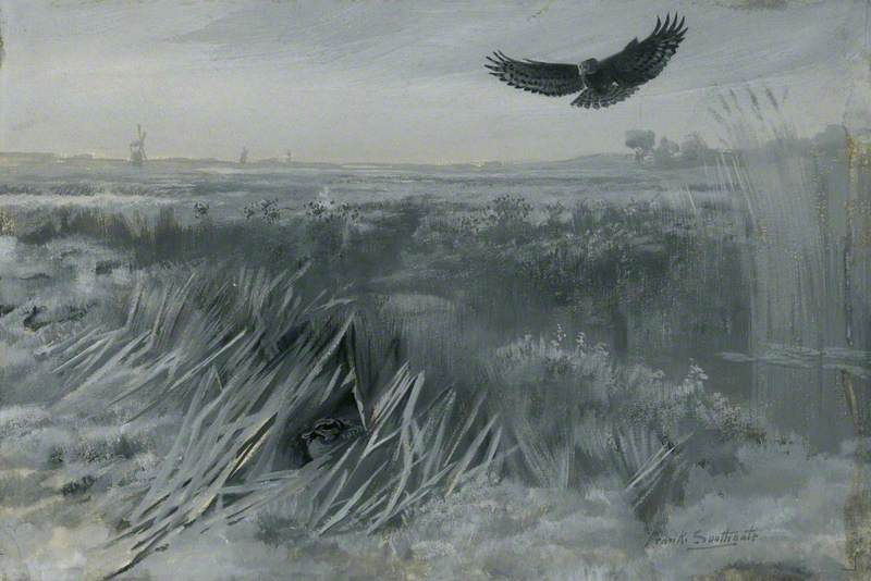 Marsh Harrier and Wounded Teal