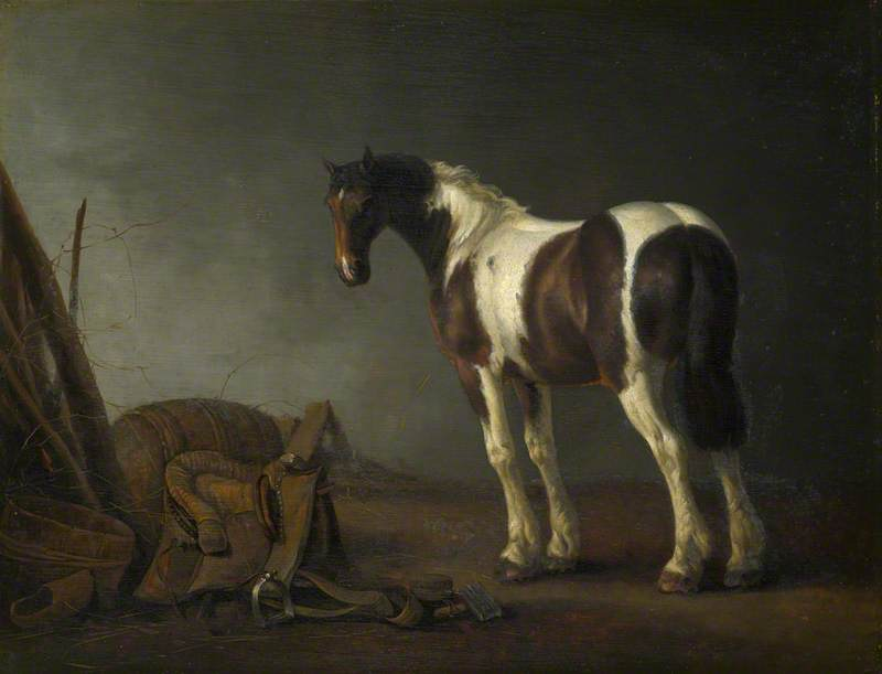 A Brown and White Skewbald Horse with a Saddle beside it