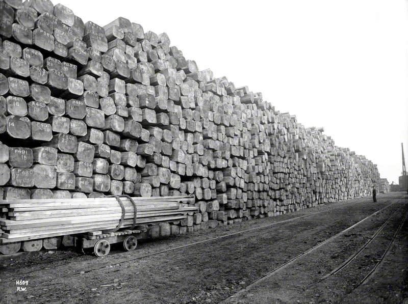 Log stacks, timber storage yard