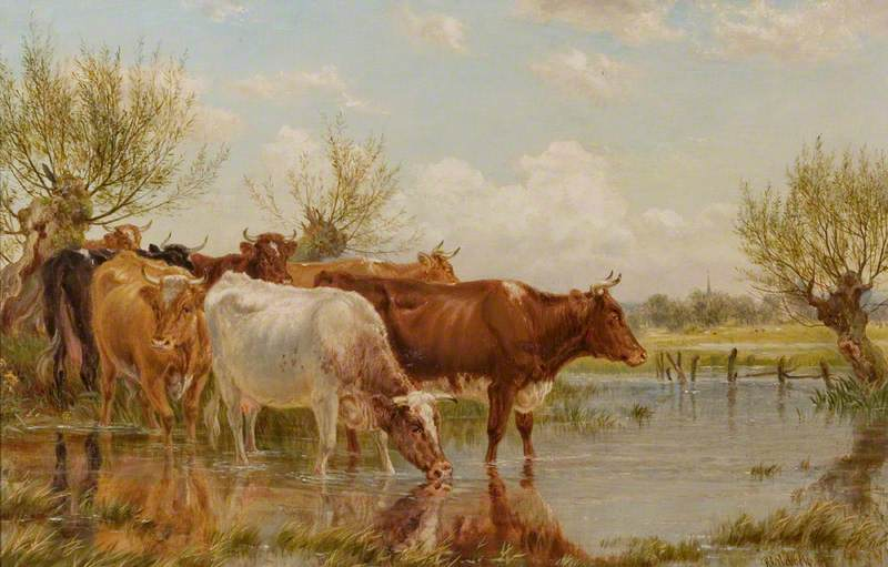 Study of Cattle at a Pond