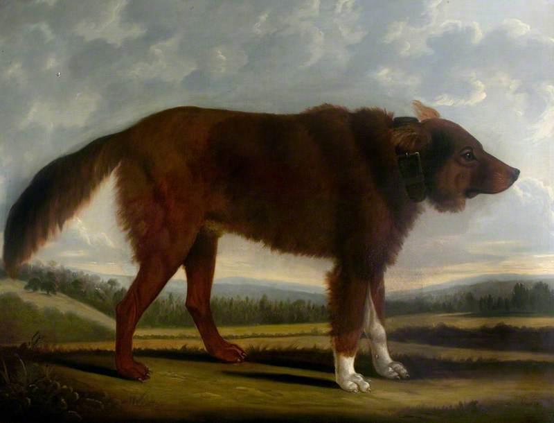 Lord Byron's Dog 'Lyon' (The Wolf Dog)