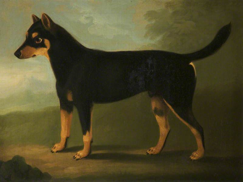 A Dog with Dark Tan and Pale Tan Markings with a Mask-Like Marking on its Face, in a Landscape