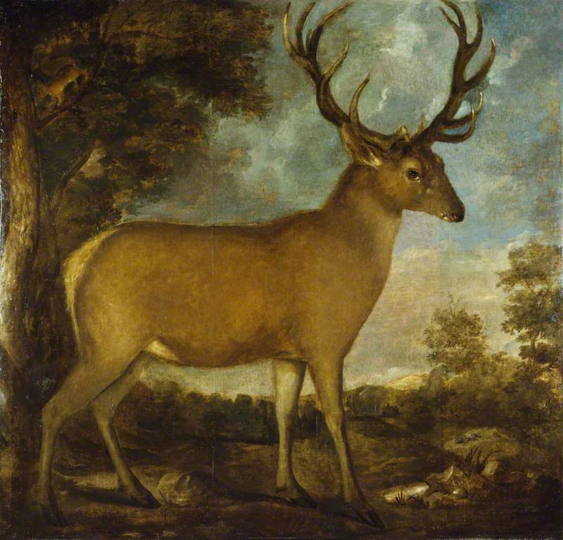 A Derby Stag
