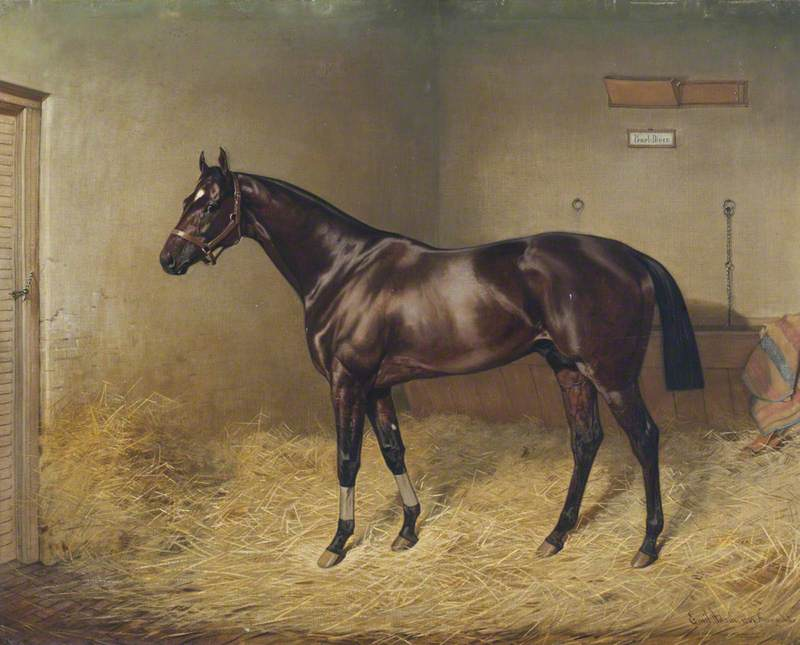 'Pearl Diver', a Bay Racehorse, in a Stable