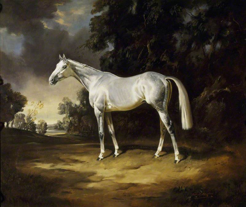 'Colonist II', Sir Winston's Grey Colt