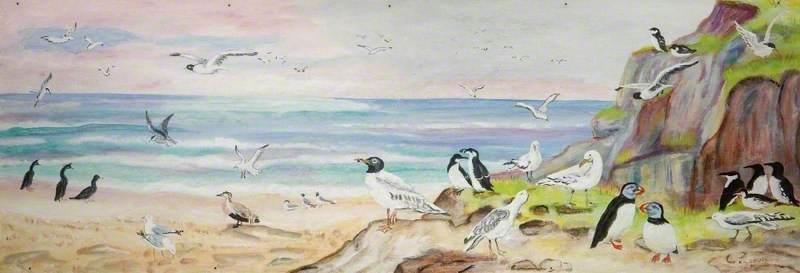 Sea Birds*