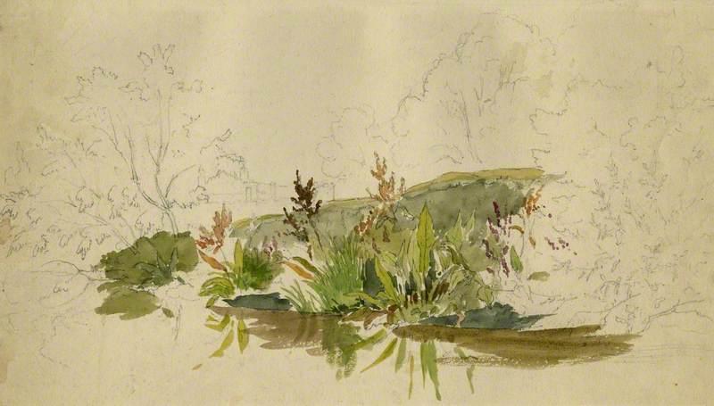Foliage by a Stream
