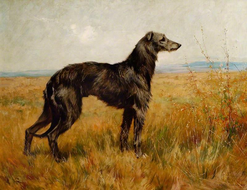 Portrait of a Deerhound, Champion Earl II