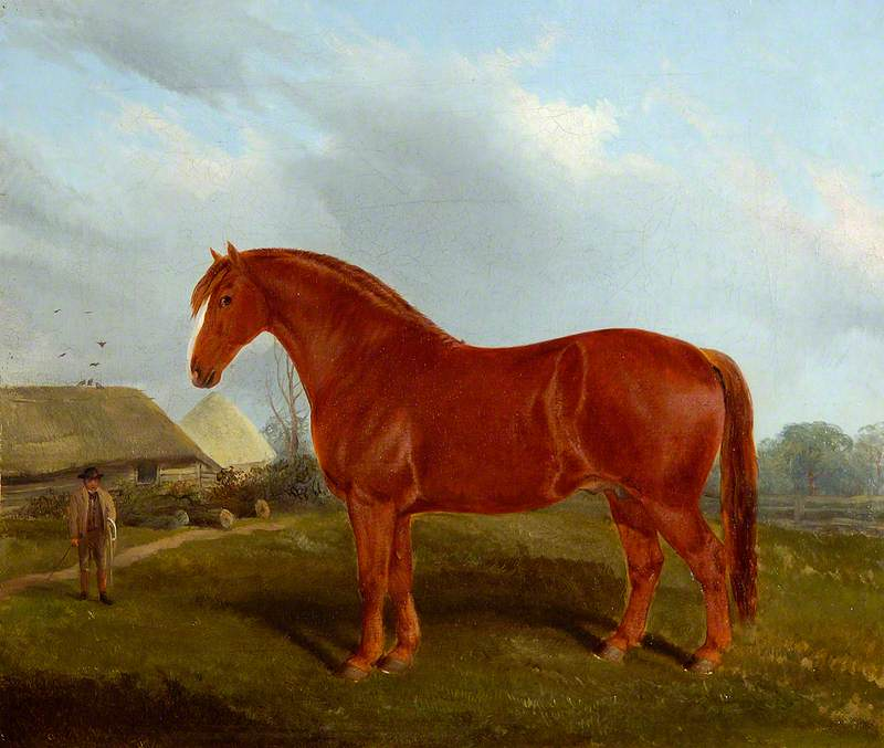 Unnamed Horse