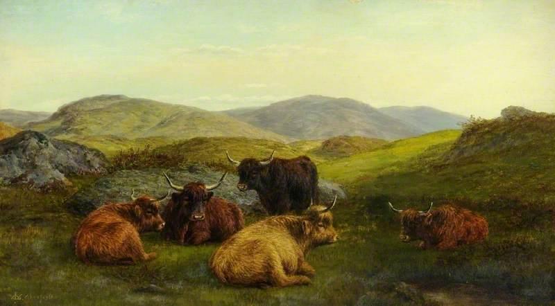 Aberfoyle, Highland Cattle