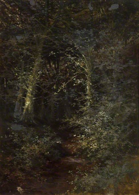 A Dark Path in the Woods
