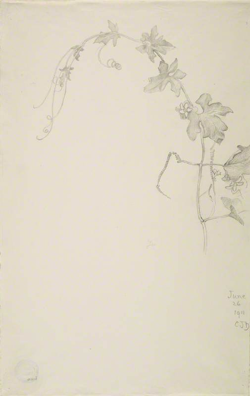 Study of Vine with Flowers