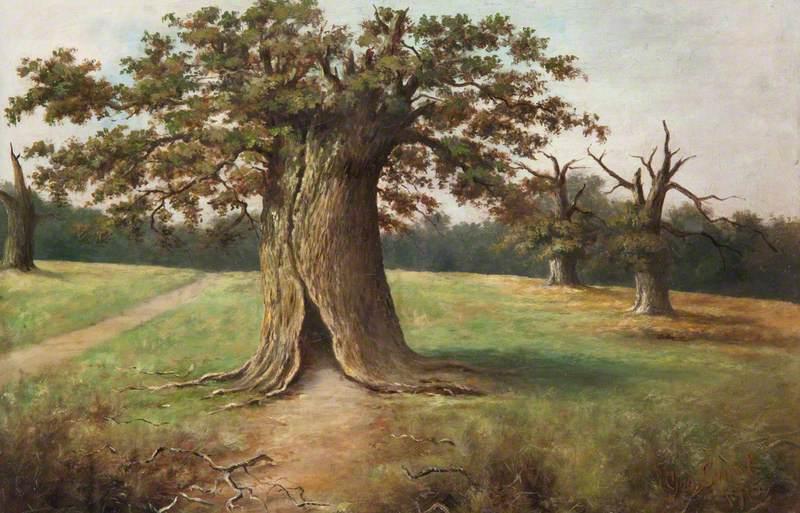 Boss Oak, Cadzow Forest