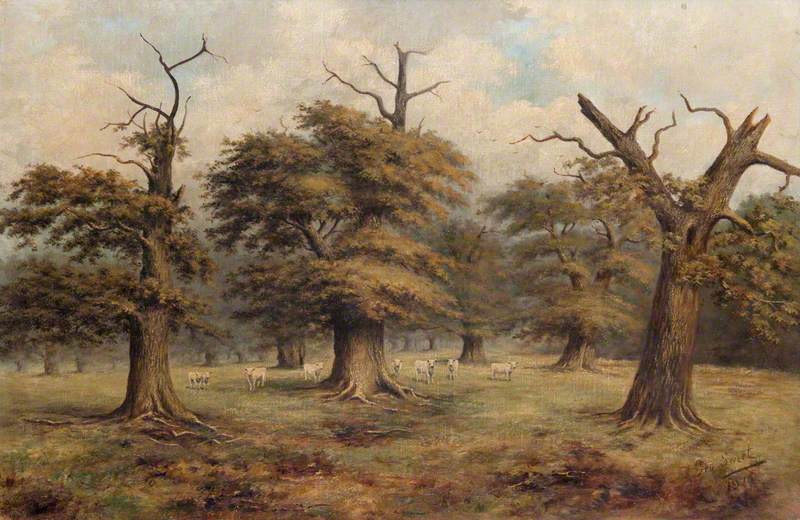 Cadzow Cattle and Oaks