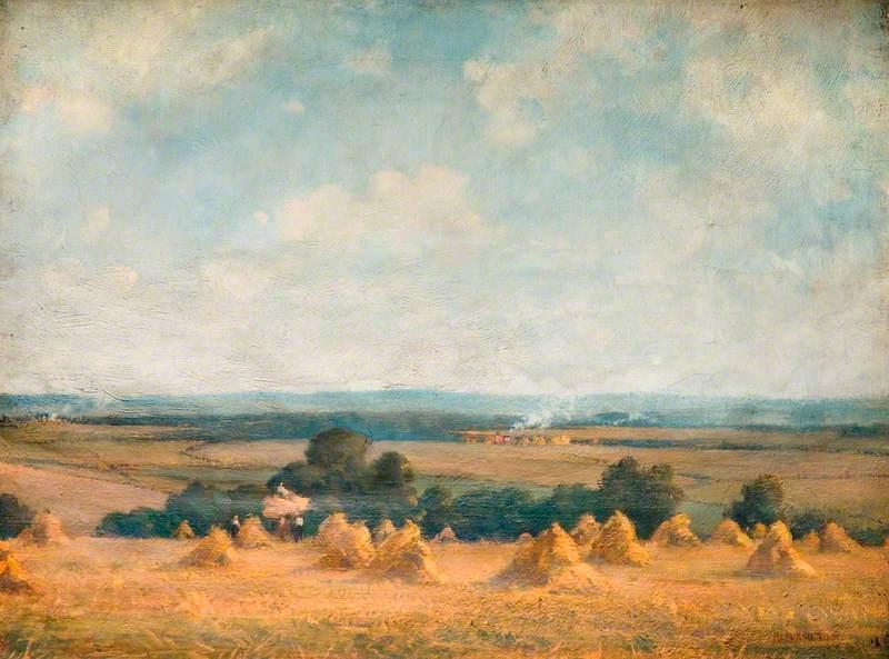 The Cornfield