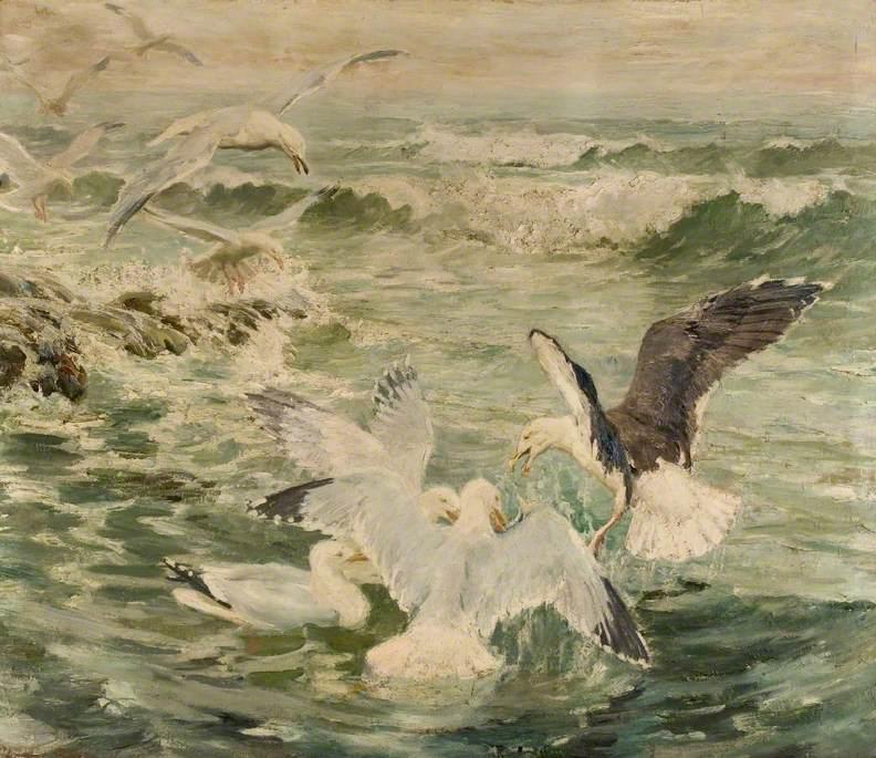 Herring Gulls and a Black Back