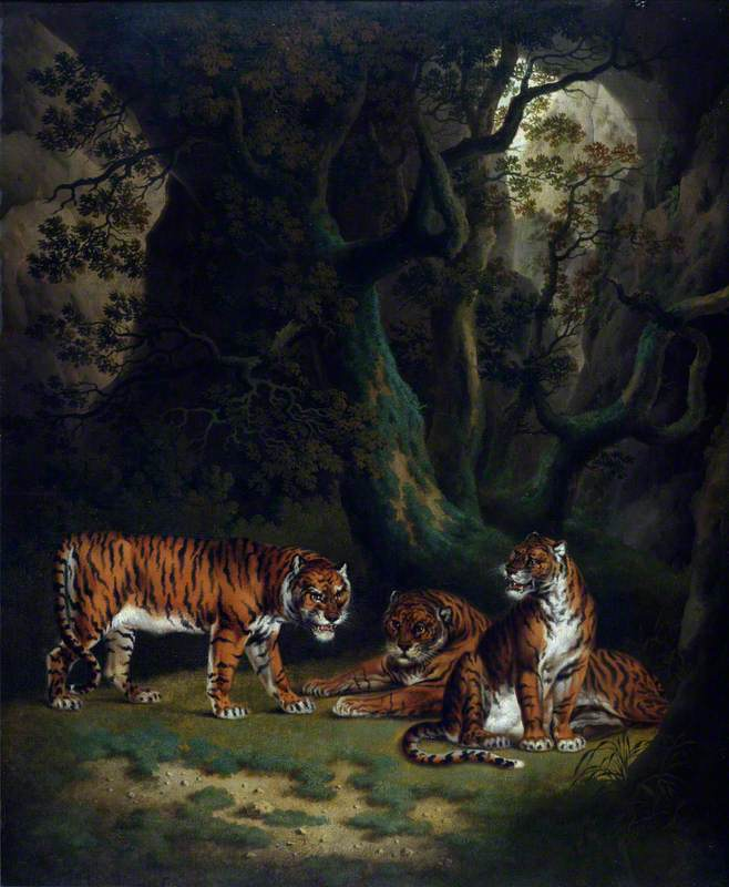 Tigers in a Jungle