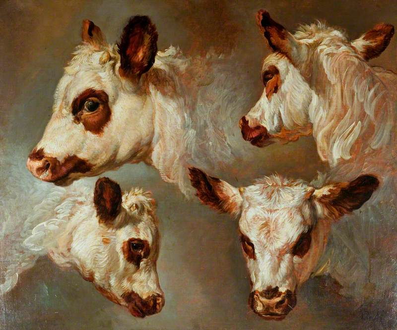 Four Studies of Heads of Cattle
