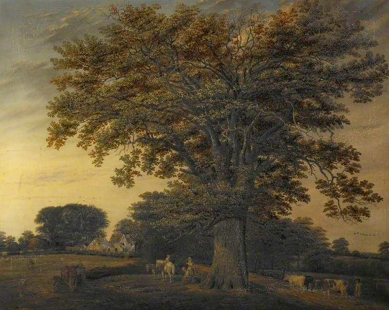The Binley Oak