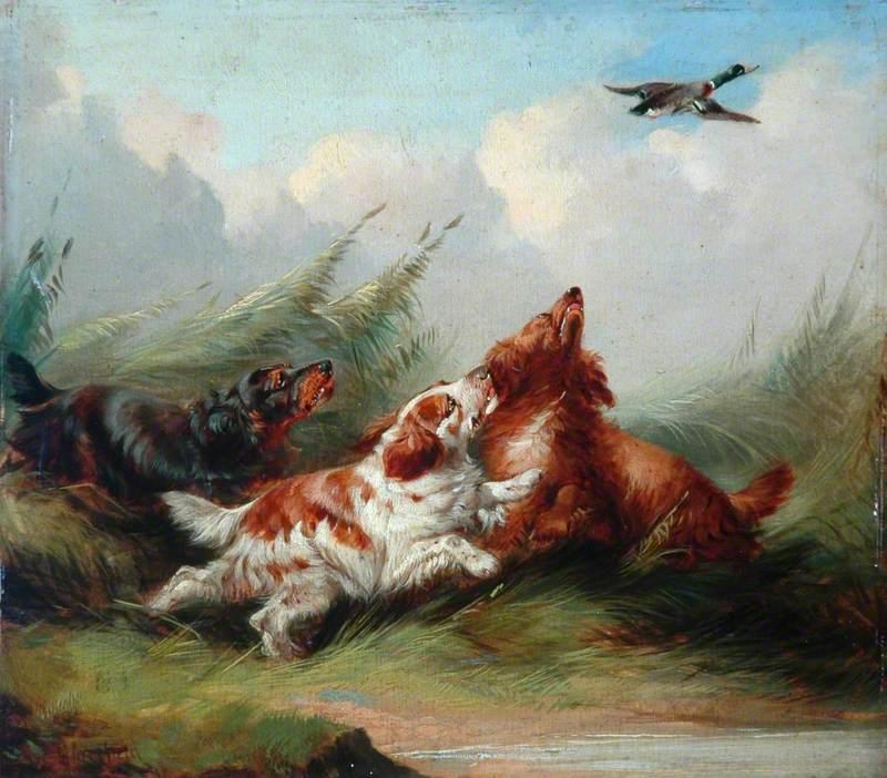 Three Spaniels and a Flying Mallard
