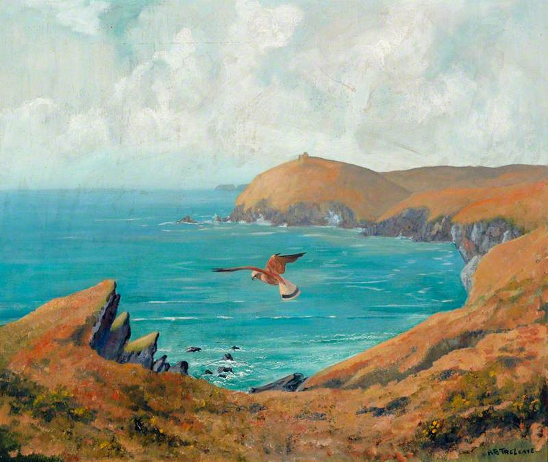 Kestrel over the Cornish Coast