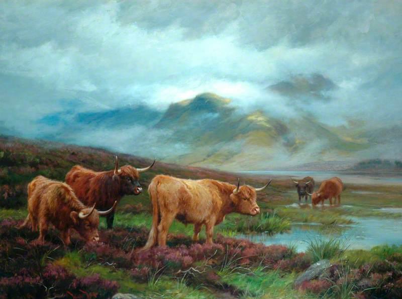 Scotch Cattle