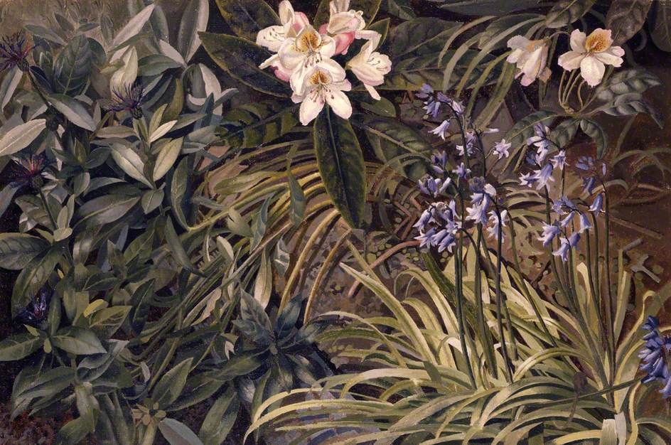 Bluebells, Cornflowers and Rhododendrons