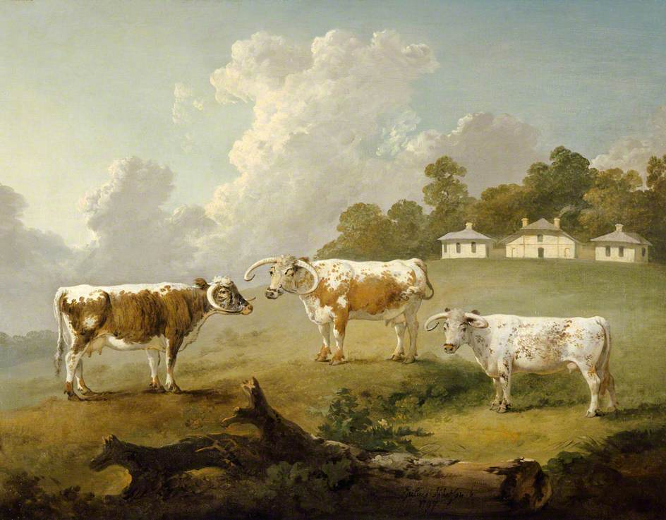 Three Long-Horned Cattle at Kenwood